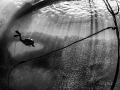 Sardines Swoop as a Diver Descends