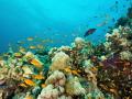 marine life in the Red Sea Sudan!