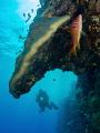 Red sea / Sudan