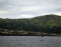 Spermwhale near Pico island Azoren