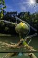 dragonflies (Lez river)