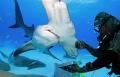 Bimini, Hammerhead Dive, Neil Watson #Hammerhead #Bimini #Neil Watson