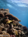 red sea coral reef animal life (magic filter and manuel white balance)