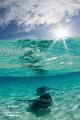 Sunburst Stingrays   Over Under at Stingray Sandbar No Photoshop