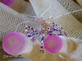 Spotted Anemone Cleaner Shrimp Canon 7D - 100mm macro - +10 diopter Bonaire