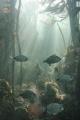 Blacktails in Kelp forest