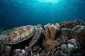Pristine reefs in Tubbataha