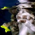 Swimmer...