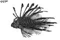 Interpretation of lion-fish
