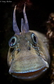 Blenny of Personality
