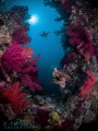 Location: Red Sea Olympus OMD-EM5,  Nauticam Housing  Inon z240 x2 Copyright all Rights reserved. Mandatory credit with image use: © 2016 Christian Llewellyn.