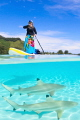 Paddleboard sharks