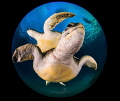 Turtle's planet
