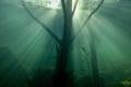 Underwater wood