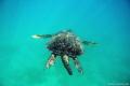 Big turtle!