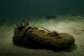 Artificial Reef made from someone's lost shoe!