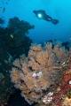 Reef Scene Tulamben