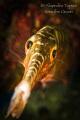 Trumpet Fish in cave  Flamingo Beach Bonaire