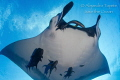 Close encounter with Mantaray, San Benedicto Mexico