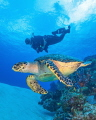 The Turtle and Evelio, C0zumel.