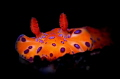 nudibranch at night