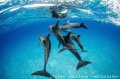 Dolphins play by morning in our wake in the clear blue water of the Bahamas