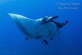 Mantaray, Socorro Island Mexico