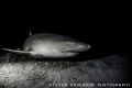 Dusk doesnt slow the action down at Tiger Beach   Bahamas. Resident Lemon Sharks make their home at this famous dive site.