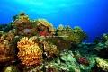 Reef in Balaclava in Turtle Bay  ,Mauritius.Jean-Yves Bignoux Canon EOS 7D,Ikelite underwater housing DS160 strobe/flash.