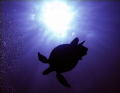 Turtle silhouette, with the sun and bubbles. Natural lighting. Taken in the Red Sea, Egypt.