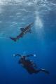 Photographer & Shark