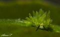 Green Beautie