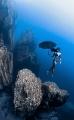 Under my Umbrella   taken on breath hold in Barracuda Lake at around 9m . Model  MJ Paula Jumuad