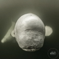 Good morning Monday!