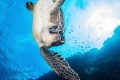 Sea turtle near Bunaken Island