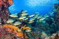 Paso del cedral Reef, Cozumel Mexico