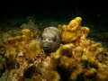 A night dive , just love pufferfish when they are sleeping