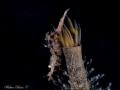 Vertical shrimp