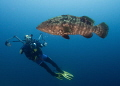 Grouper with model photographer