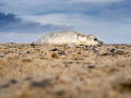 Top of the Heap ...