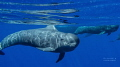 ICU......