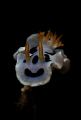 Isolated Nudibranch