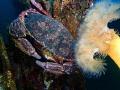 Romantic moment between crabs