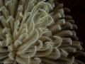 Delicate Feathers - Castle Reef - Aliwal Shoal