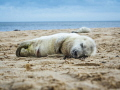 Nap time