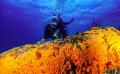 Diver and orange sponge