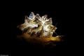 Butterfly Location : Romblon Philippines Canon 5dsr Canon EF 100mm f/2.8 L Macro IS USM Lens: F18, 1/250, ISO 400 SEACAM silver CANON EOS5D MKIII SEACAM SEAFLASH 150 DIGITAL RETRA LSD Nauticam SMC-1 Howshot M50 Video Light 5000/Lumen