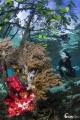 Diver at Mangrove