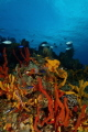 Colourful Reef Scenic, Cozumel