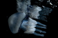 swimming Sleeping water meeting this splendid specimen of Rhizostoma pulmo